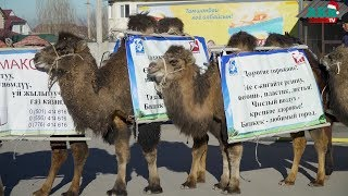 Караван верблюдов против смога