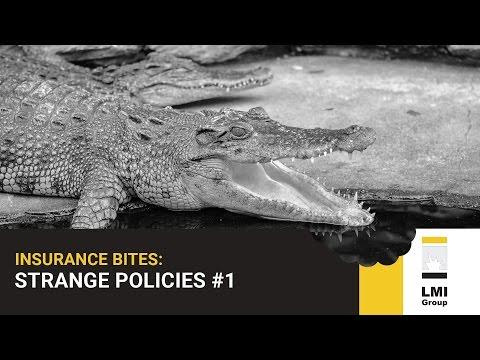 INSURANCE BITES: Strange Policies #1