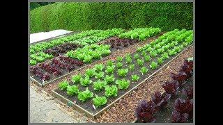 vlog: жизнь в деревне - огород или участок на даче