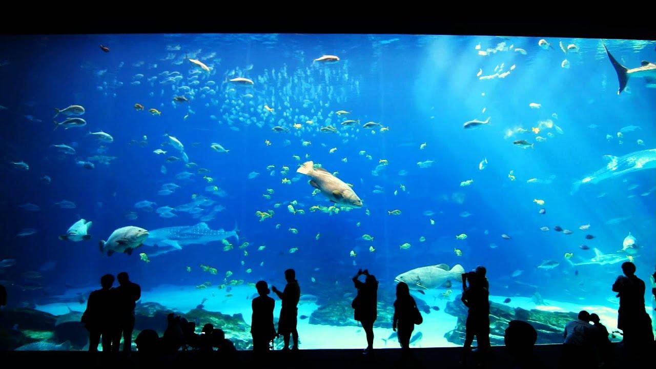 Image Gallery Public Aquarium