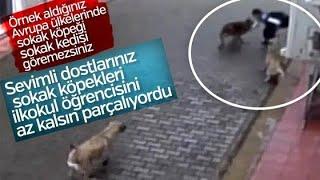 Bursa'da başıboş köpekler 12 yaşındaki çocuğa saldırdı   (SICAK GELİŞME)