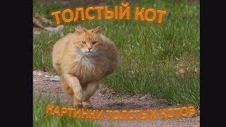 Самые толстые, смешные коты в мире