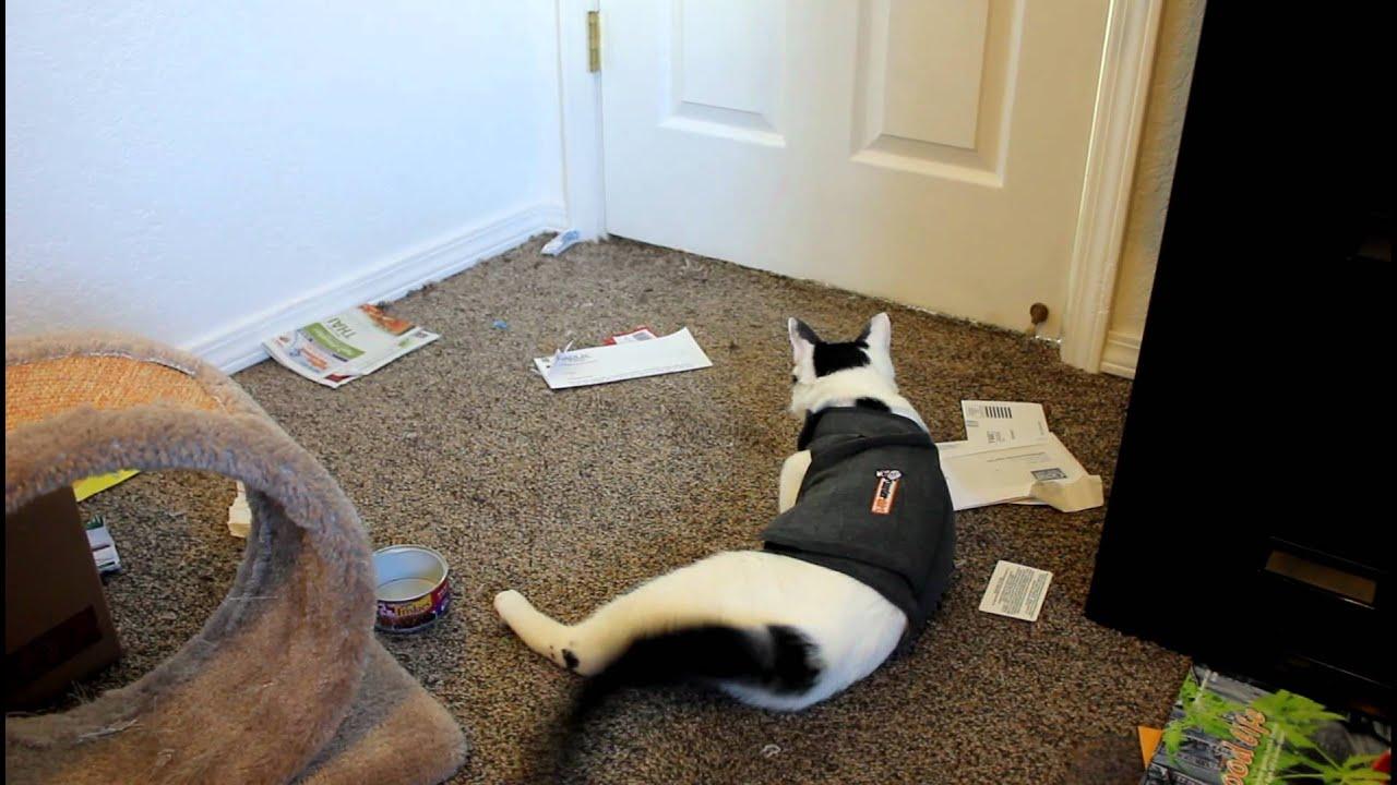 black tabby cat personality