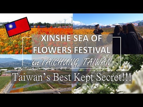 Taiwan's BEST KEPT SECRET - Sea of Flowers in Shinshe (Xinshe) | DJI Mavic Mini Flight Review