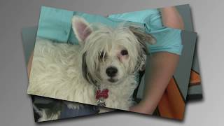 Zoom Room Dog Agility Training Center