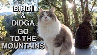 Didga & Bindi  Rock Jumping CATS