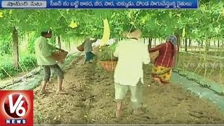 Success Story of Bitter Gourd Farming by Babaguda Farmers   Shamirpet   RR District   V6 News