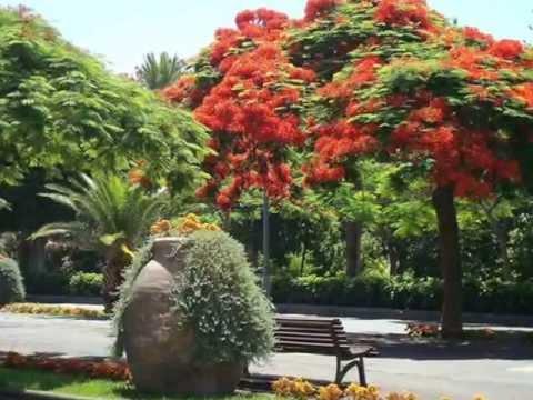 Tenerife santa cruz parque garc a sanabria youtube - Parques infantiles santa cruz de tenerife ...