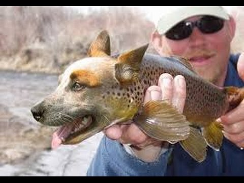Dog and fish funny youtube for Fish for dogs