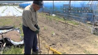 農文協DVD 直売所名人が教える 畑の作業 コツと裏ワザ第2巻