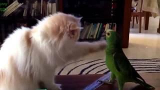 Смешные приколы кошки против попугаев