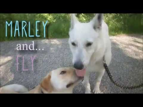 .::Marley and Fly ♥ Dog Best Friends::. Walk 1.7.2016