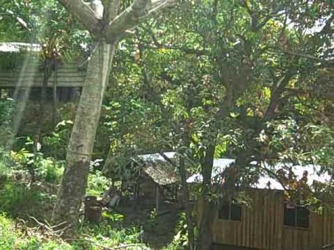 A Tour of SU Solomon Islands Property.wmv