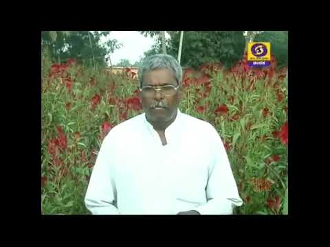 Successful farmer Basappa koppal makes Amazing Reshme flower cultivation