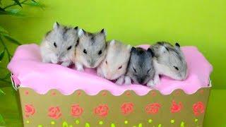 Пять Хомячков прыгают в кроватке!  ★ Five little Monkeys jumping on the bed  ★ Детские песенки