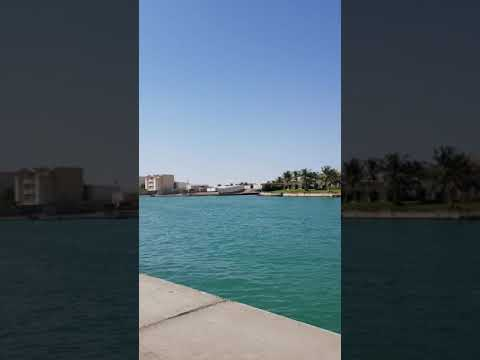 Camel Roundabout دوار الجمال أبحر 13