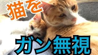 構ってほしそうな猫たちをガン無視しようとしたら予想外の展開になった! thumbnail