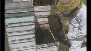 Beekeeping Basics : Beekeeping: Building An Active Beehive