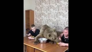 Обычная русская семья))) #семья #юмор #позитив