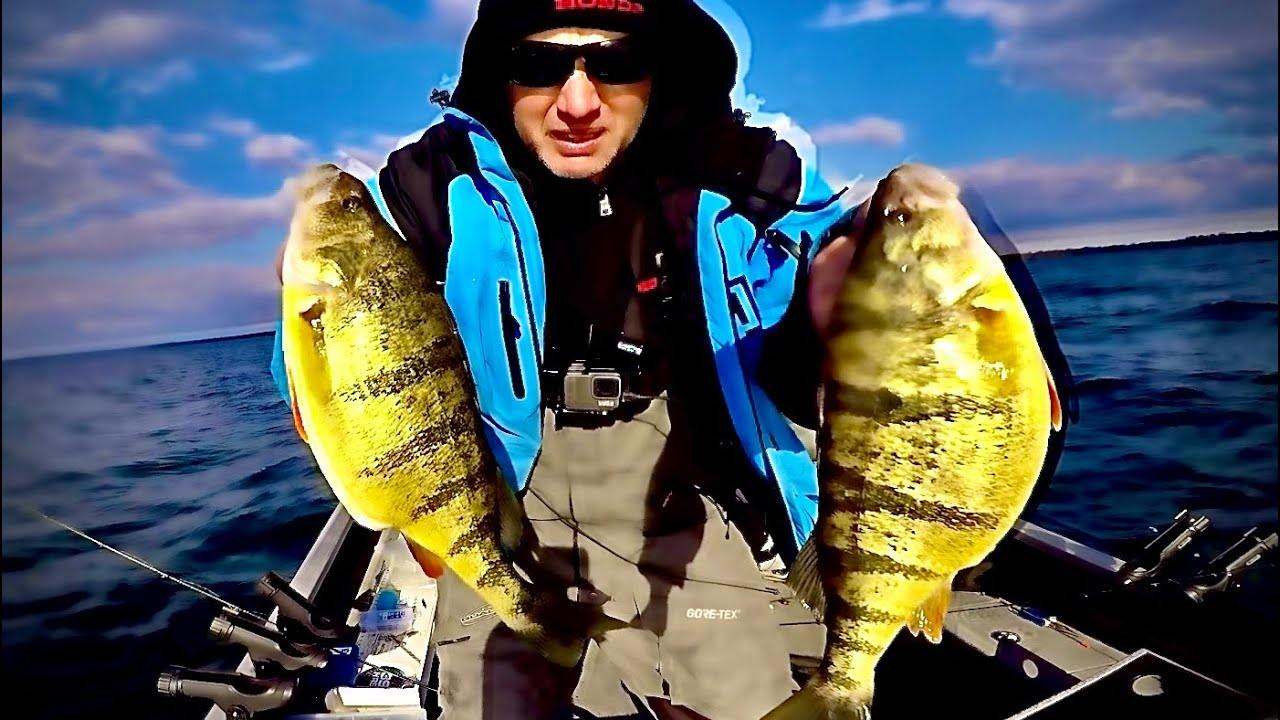 How to find and catch perch in spring and summer!
