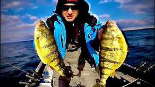 Perch Fishing Lures On Lake Simcoe Jay Siemens Catch and Cook 7 x Dip Jumbo Perch