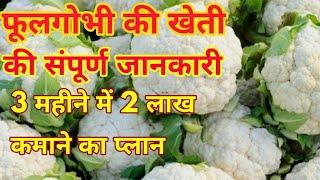 फूलगोभी की खेती की संपूर्ण जानकारी phool gobhi ki kheti cauliflower farming