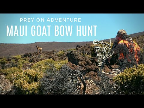 SUCCESSFUL DIY MAUI GOAT BOW HUNT FOR OUR HONEYMOON!
