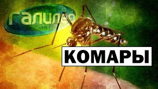 Галилео | Комары 🕷Mosquitoes