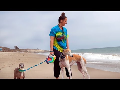 Реакция моих собак на ОКЕАН ! - Дженна Марблс