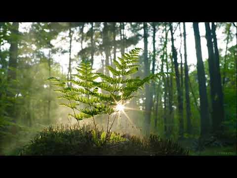 Kuş Sesi 3 Saat, Doğa Sesleri
