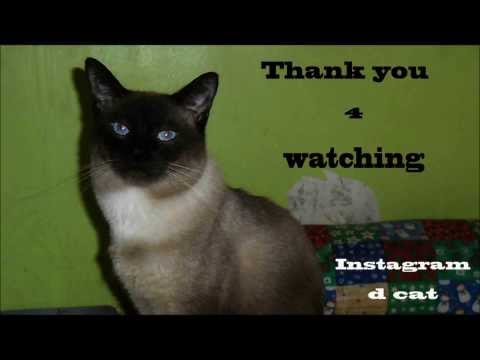 funny cat Instagram the cat