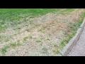 Zoysia - Bringing Zoysiagrass Back To Life - The Grass Factor
