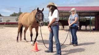 Horse Clicker Training - Peggy Hogan