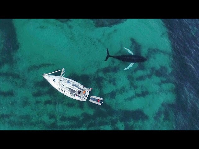 Dramatic footage of free diver and killer whales in the Arctic.