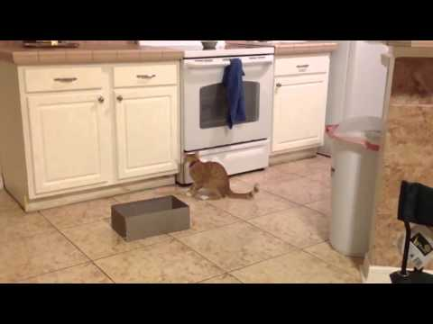 Cat desperately tries to catch own tail