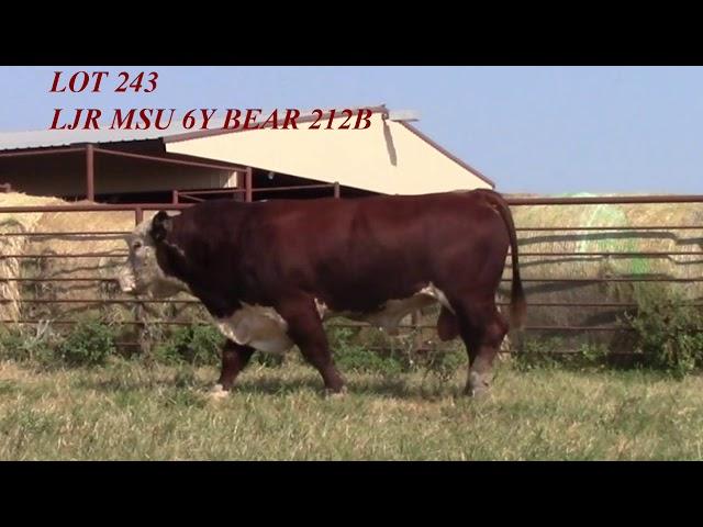 Mead Angus Lot 243