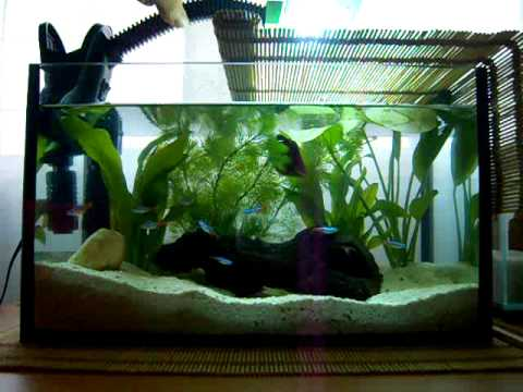 My aquarium with betta neon tetra aquatic plants youtube for Neon aquarium