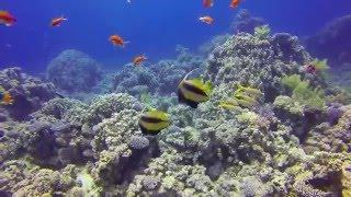 Видео Египет красное море 2016 год(Видео Египет красное море 2016 год. http://ht.kiev.ua/tours/country8.html Для вас мы работаем 24 часа в сутки и семь дней в неделю..., 2016-03-16T23:57:35.000Z)