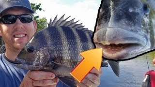 Catch Clean and Cook Sheepshead- Fishing for the Fish with Human teeth - how to catch