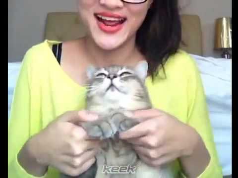 Gwiyomi Song by Hanis Zalikha dan Kucing Comel