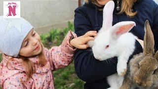Кошка кролики и собака Настя играет с животными у бабушек Катаемся на гироскутере и самокате ВЛОГ