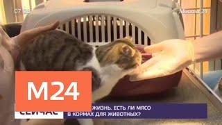 Что спрятано под яркой упаковкой корма для животных - Москва 24