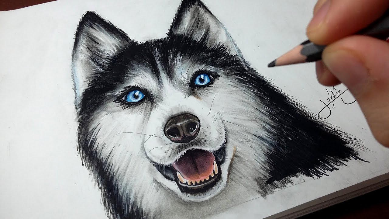 comment dessiner un chien husky tutoriel youtube. Black Bedroom Furniture Sets. Home Design Ideas