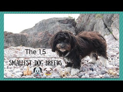 15 Smallest Dog Breeds