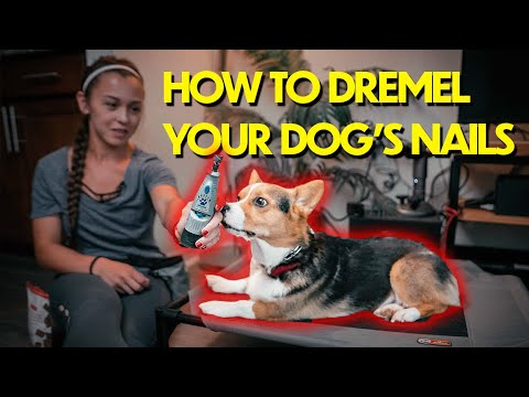 The SECRET to Dremeling Your Dog's Nails At Home