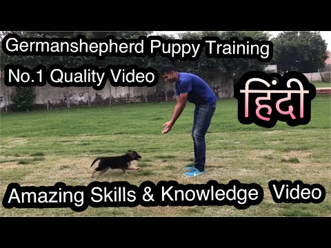 Germanshepherd Puppy Attack Training, Socialisation and Total Care
