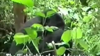 Atlas Safaris Uganda (German)