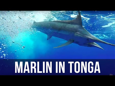 Chesters and Bosch Tonga Trip (Season 5 Ep 5)