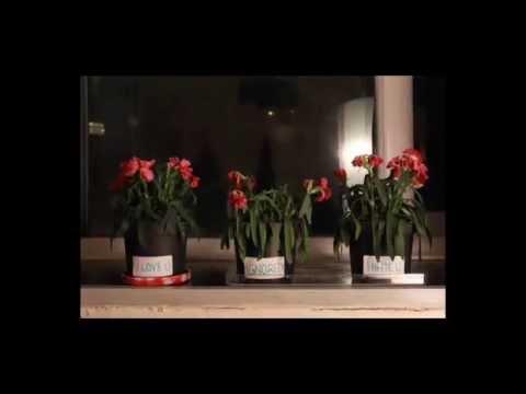El experimento de la flor