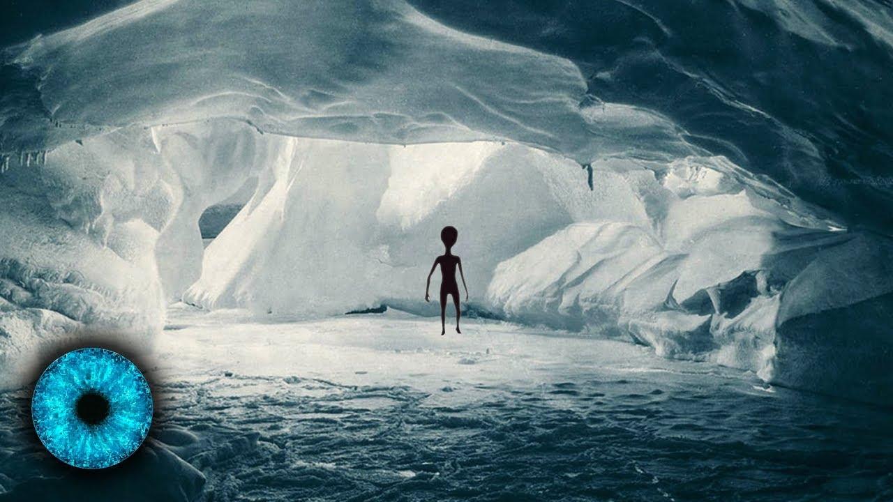 Leben In Der Antarktis